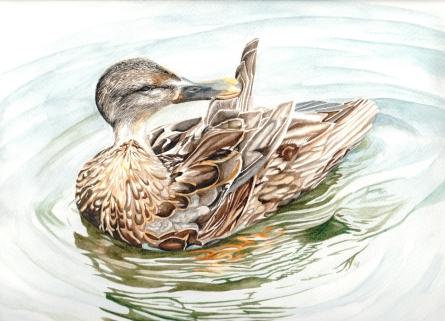duck_smaller