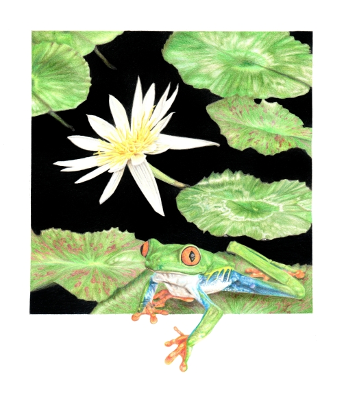 Lily and Frog
