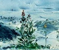 strindberg blomman vid stranden details